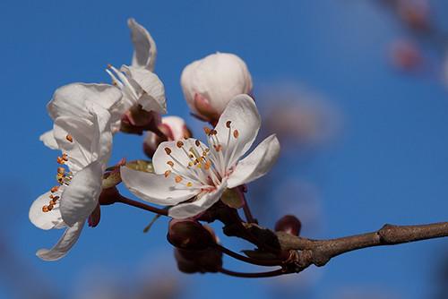 8576288932 2fe60bb204 Vive le printemps!