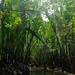 Mangrove 14