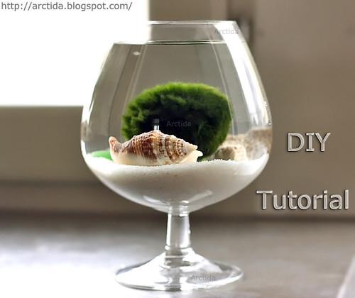 DIY tutorial Marimo moss ball mini aquarium with sea treasures