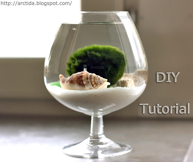 DIY tutorial Marimo moss ball mini aquarium with sea treasures