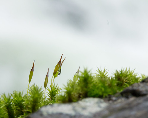 Moss by b2witte