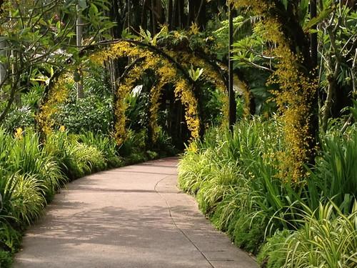 Singapore Orchid Gardem archways