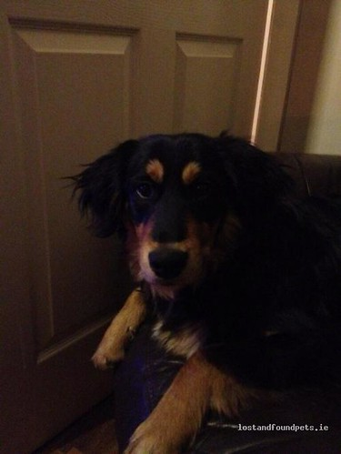 Mon, Mar 25th, 2013 Lost Male Dog - Louth Hall, Tallanstown, Louth