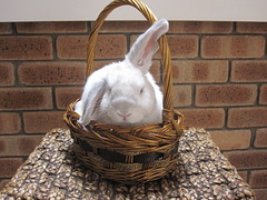 George in a Basket 1