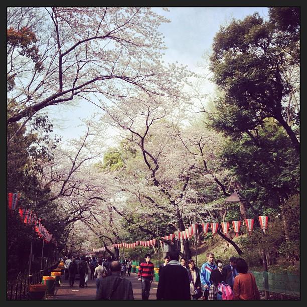 當年的回憶、梅与桜
