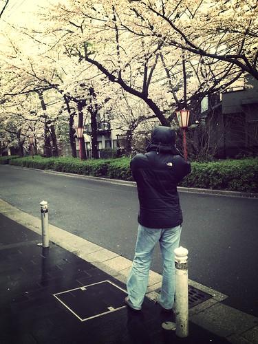 102   細雨中的櫻花
