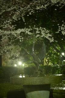 夜桜@高岡古城公園。