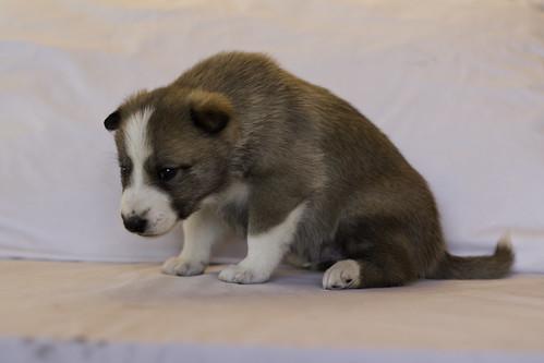 Ike-Kilbe-Pup1-Male(Day 22)-3