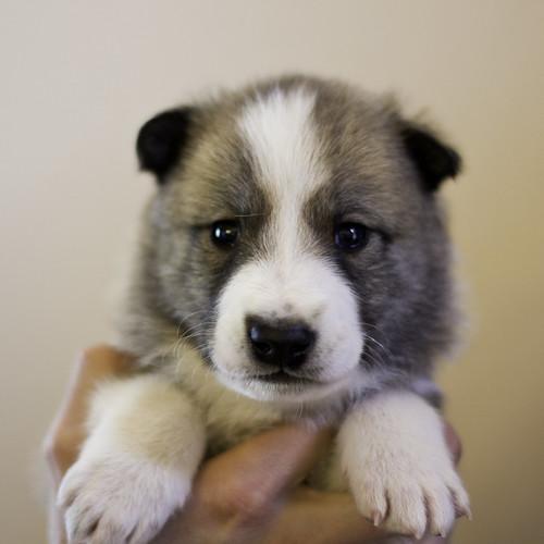Ike-Kilbe-Pup1-Male(Day 22)-1