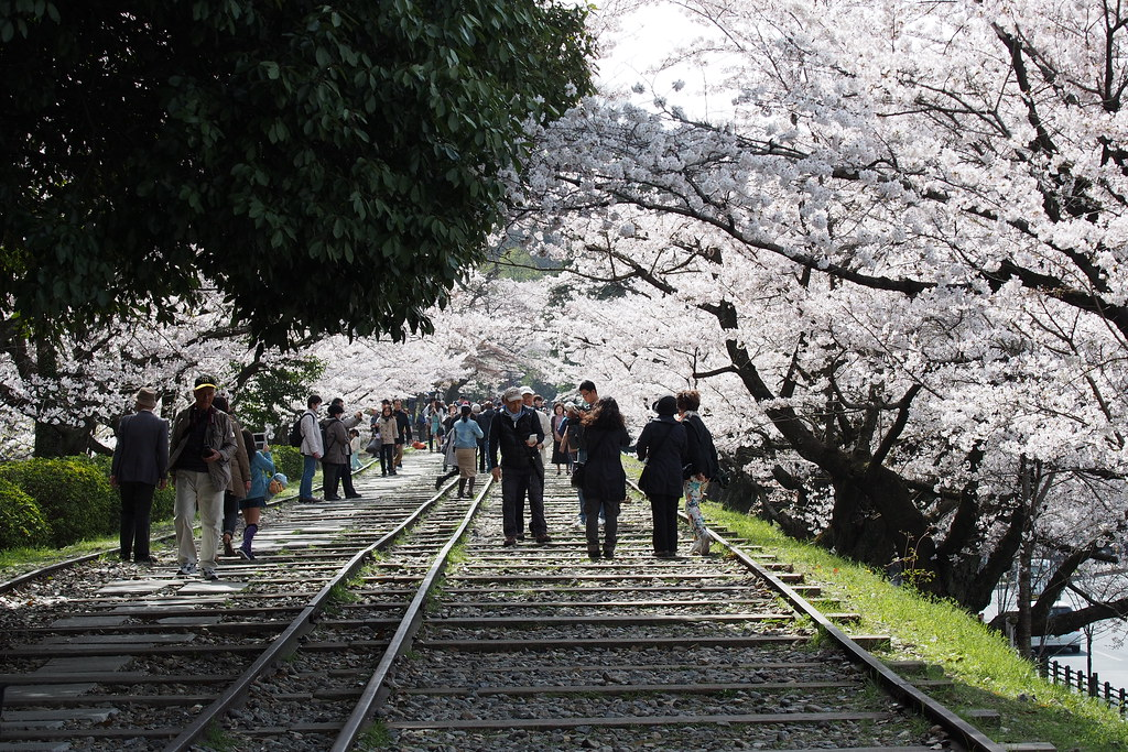 蹴上傾斜鐵道 櫻花