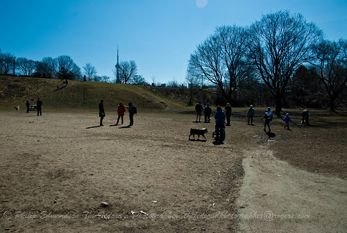 Dog Park Crowd