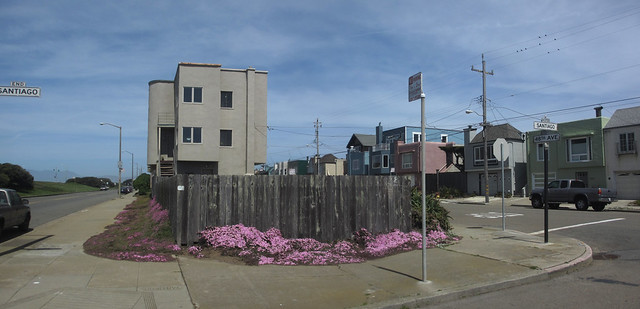 purple flowers at Great Highway; The Sunset, San Francisco.  April 13, 2013