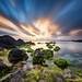 Seaweed Garden by DanielKHC