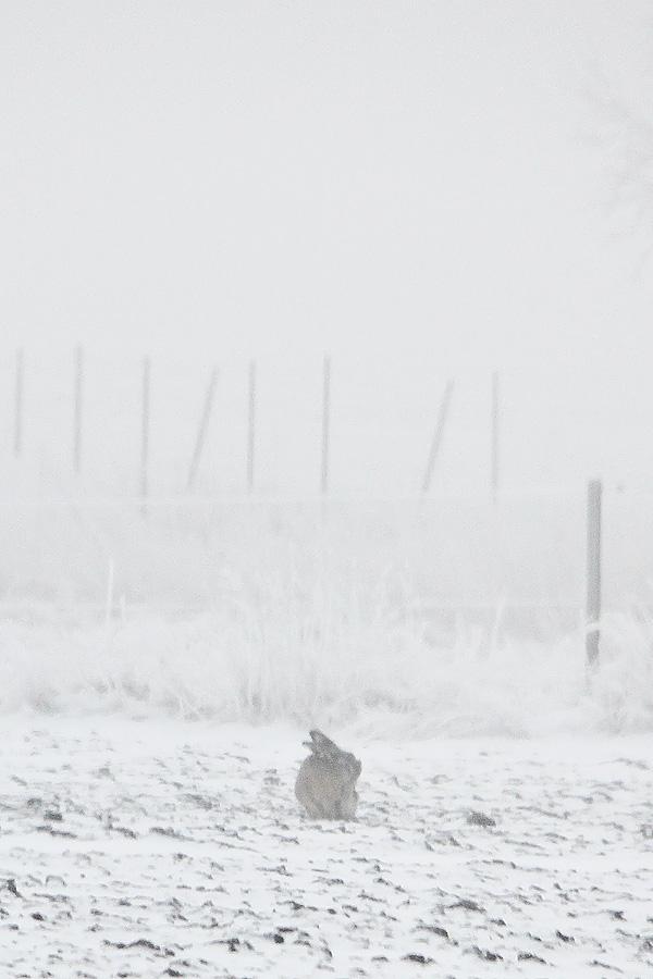 Vinterdag-2-kanin