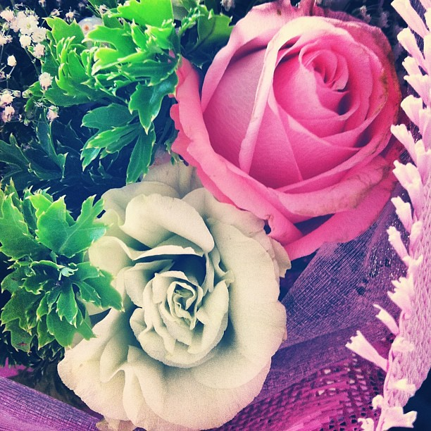 Because my valentine is unique. #doublemeaning #onceayear #bloom #srilankan #flower #pink #mint #color #vanlentine