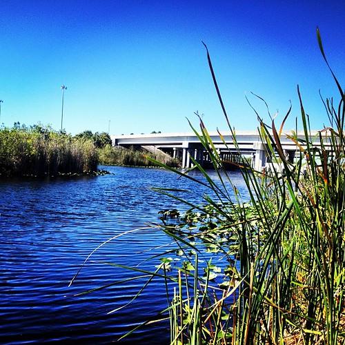 So peaceful & beautiful. #everglades #florida #igersftl