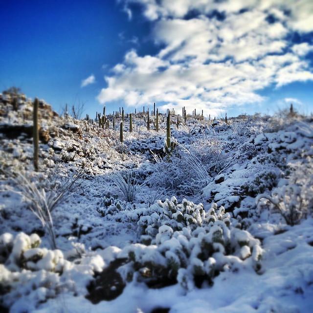 Saguaro National Park, snowy morning