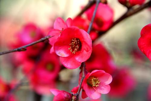 Flores by Marta BA