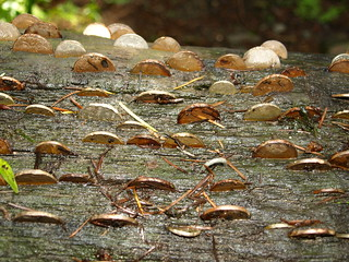 Coins stuck in a log