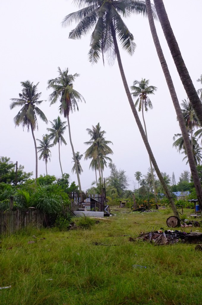 Grass and Coconut Trees