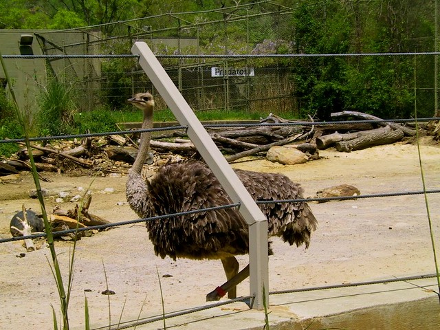 Birmingham Zoo Lora, Meadow, Sandra April 10, 2008