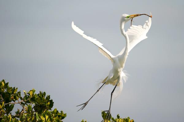 RYALE_Everglades-109