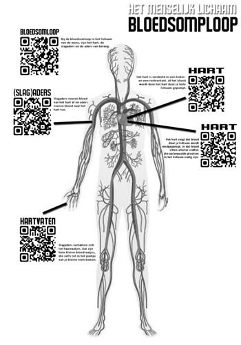 2013-03 > #QR menselijk lichaam - bloedsomloop
