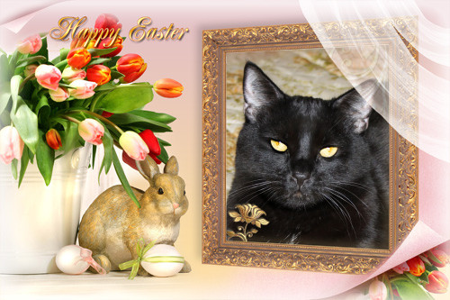 Happy Easter From Blacky!! 31/3/2013..