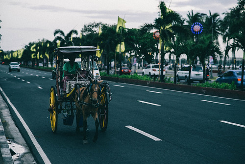 Horse. Carriage. Road.