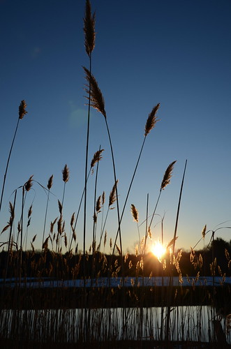 morning blue sky grass silhouette sunrise