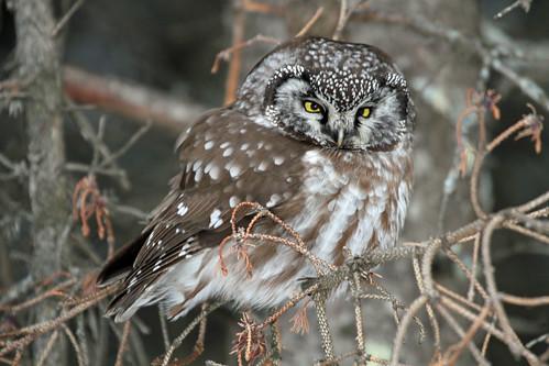 Minnesota Birding