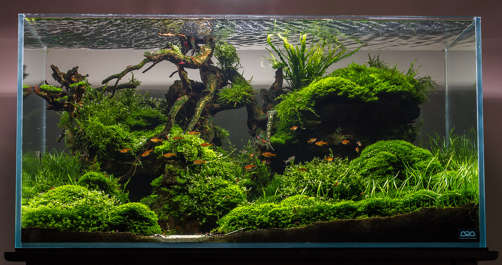 Aquascape No. 3 - ADA 90P - Moss Canyon - Final Photo on 1st page ...