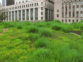 green roof, City Hall, Chicago (by: Christopher Macsurak, creative commons)