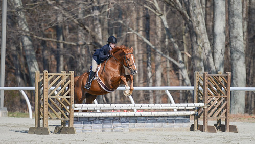 sports animal animals jumping equine equitation sweetbriarcollege