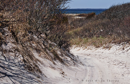 The sand dunes of Fire Island by Alida's Photos