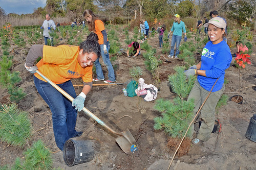 Volunteers work during a MillionTreesNYC fall planting day in New York City. (New York City Department of Parks and Recreation Photo/ Malcolm Pinckney,)