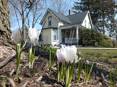 Spring flowers at MPL Read House