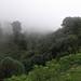 Red Panda habitat (Hem Sagar Baral)