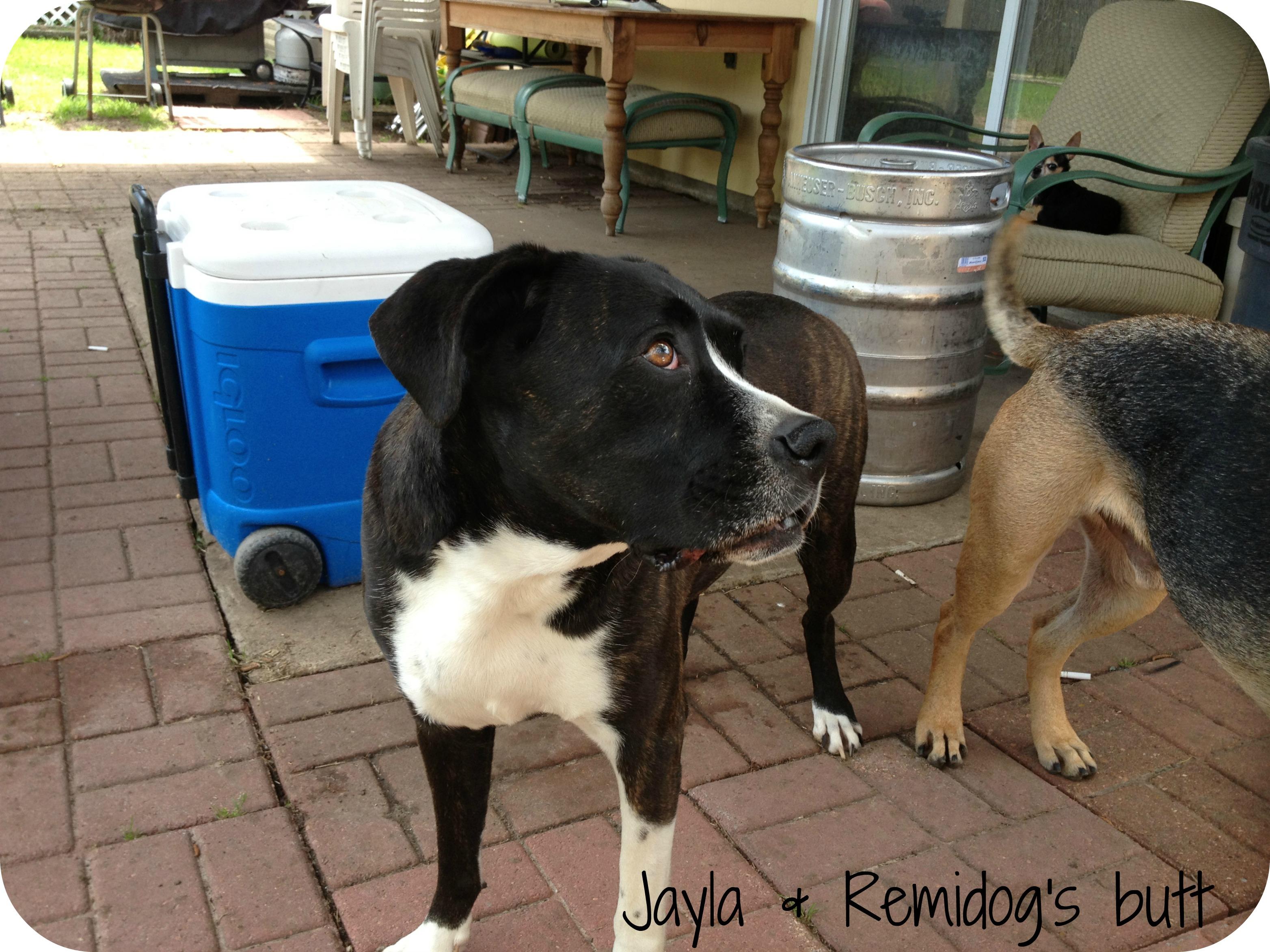 Jayla & Remidog's butt