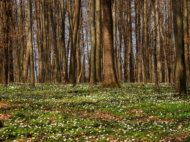 White and green Spring Carpet