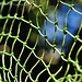 Netting - Abstract