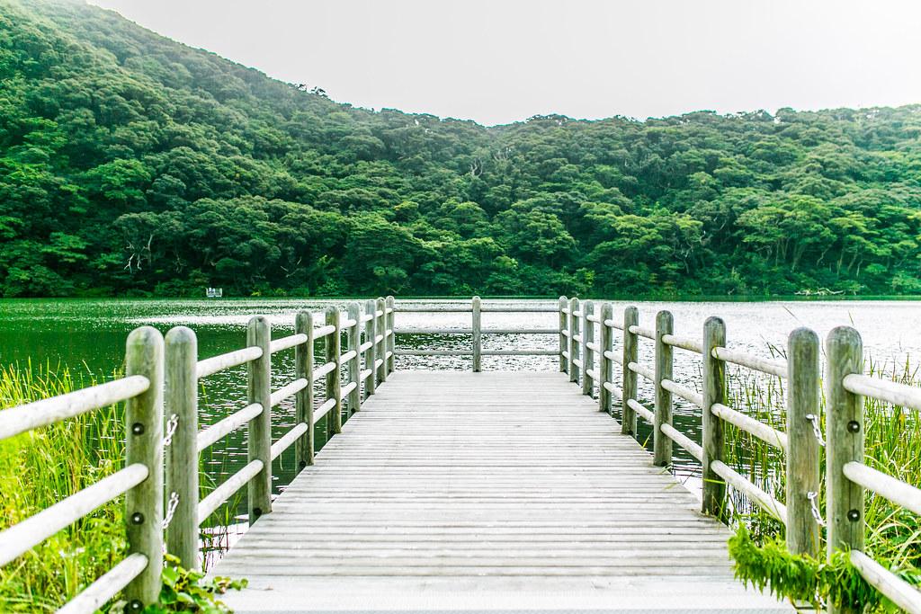 迷子椎 三宅島 取材 #tamashima #miyakejima #tokyo #tokyoreporter