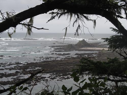 ocean statepark water oregon island or pacificocean pinnipeds seals sealions reef shellisland capearago coastaloregon simpsonreef capearagostatepark oregonislandsnationalwildliferefuge