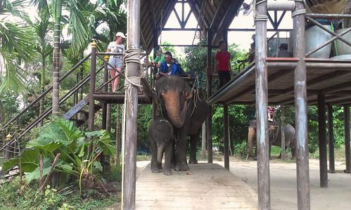 Koh Samui Namuang Safari Park サムイ島ナムアンサファリパーク