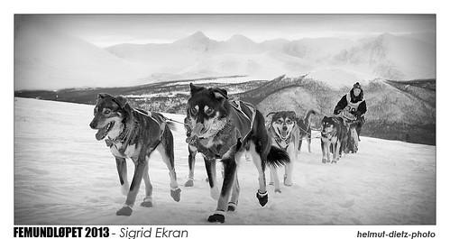 _MG_4413-Sigrid-Ekran-Collage-b-1000px-sw-web50