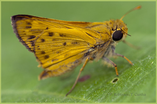 Butterfly - Slender by Robinson T Cunha