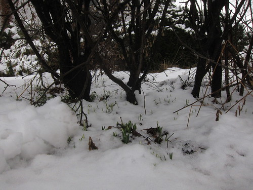 Snow drops 18 hours later by Michael Tinkler