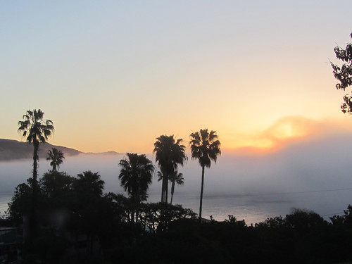 fog bank at dawn