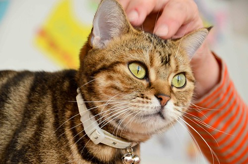 Cats at Hapineko Cat Cafe