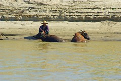Life On Irrawaddy River